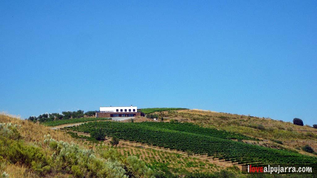 "Centro Temático del vino ""Alpujárride"""